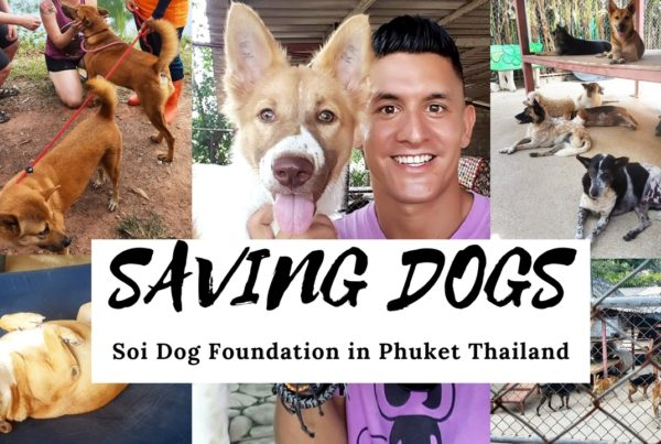 saving dogs
