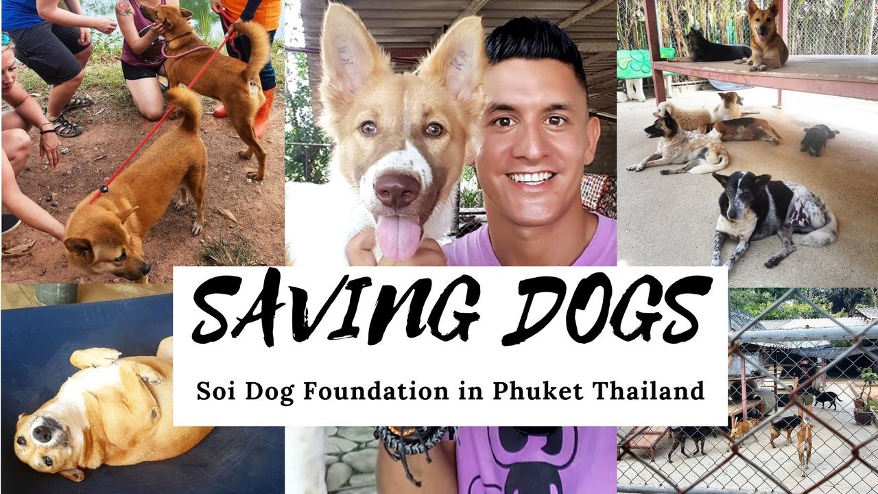 Saving Dogs at Soi Dog Foundation
