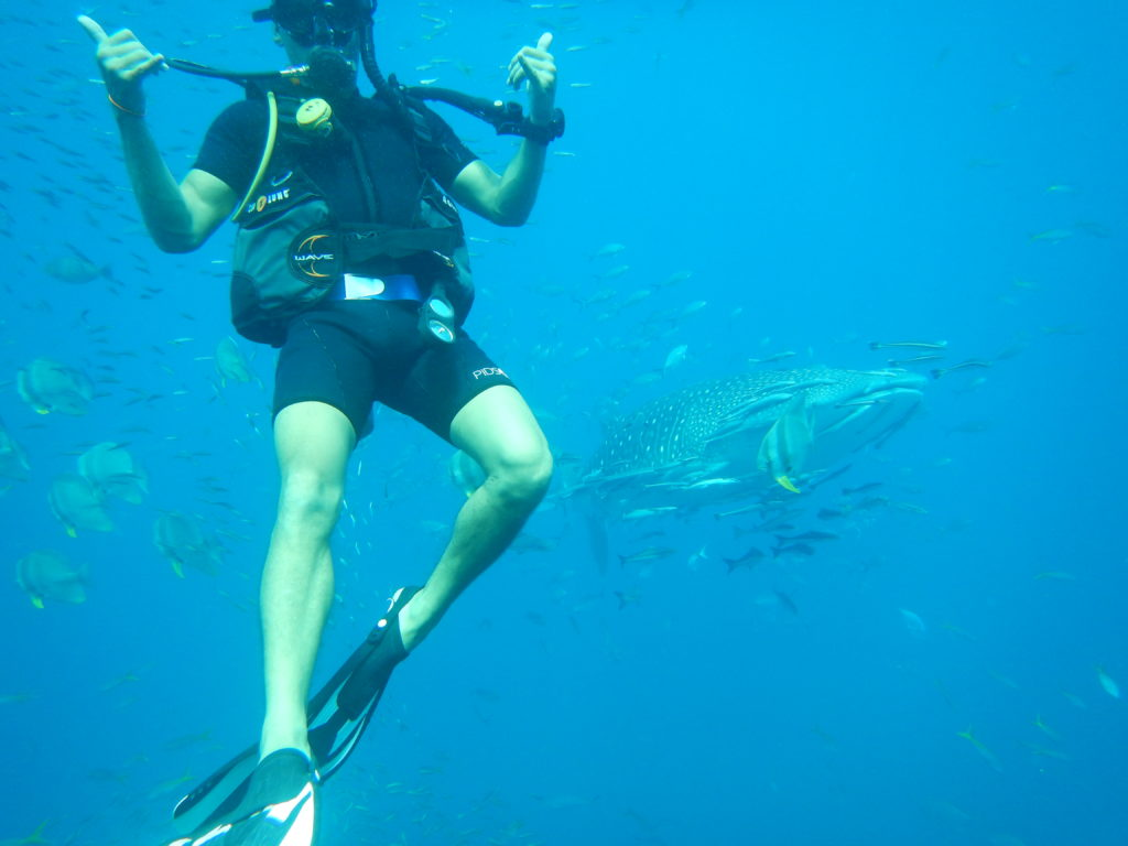 Thailand Scuba Diving with Whale Sharks in the gulf of Thailand for the PADI Open Water Certification at Sail Rock in Koh Phangan.