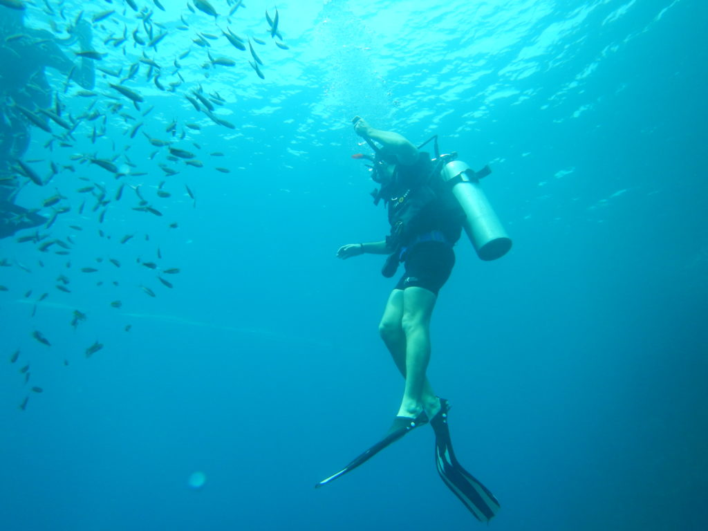 thailand scuba diving with whale sharks